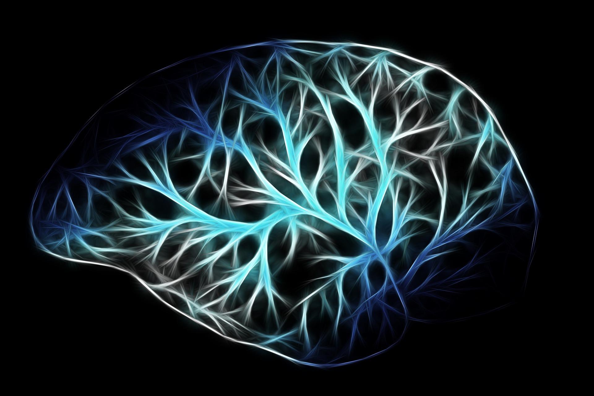 brain-2676370_1920